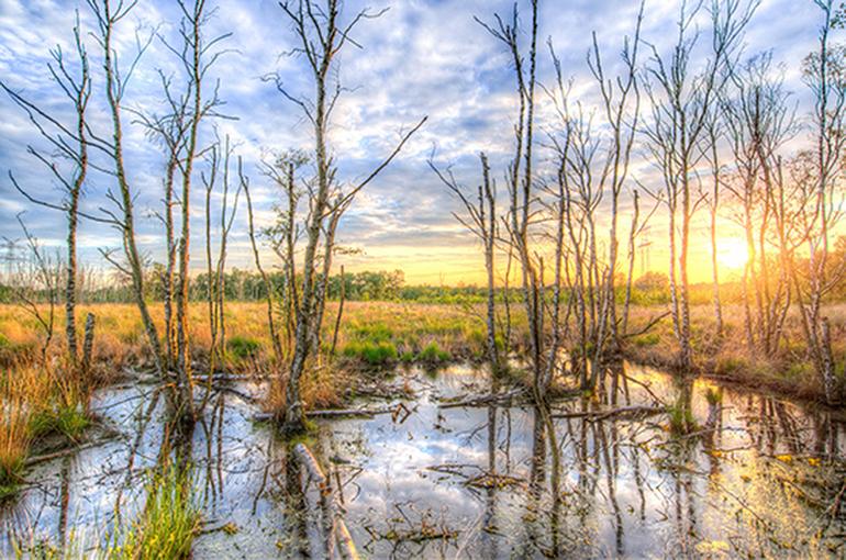 Добычу полезных ископаемых на болотах могут упростить