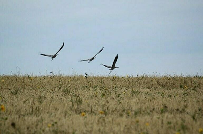 В России засеют 13 миллионов гектаров брошенной земли