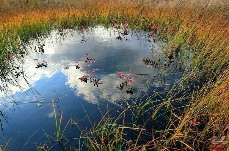 Разведку и добычу полезных ископаемых на болотах предлагают упростить