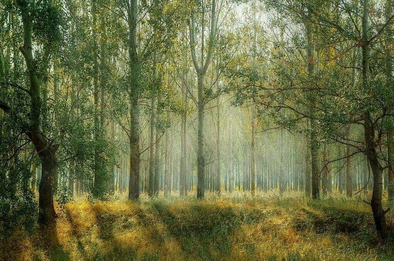 В России сохранят лесные династии