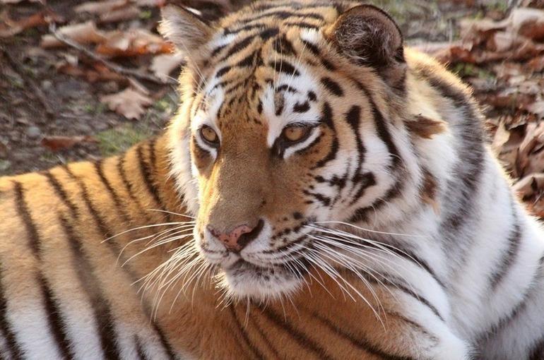 В Минприроды предупредили, что 13 видов животных могут исчезнуть безвозвратно