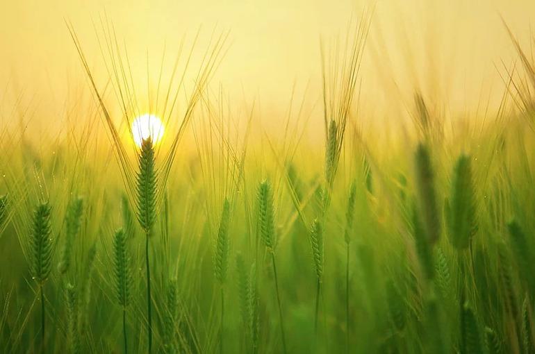 Минсельхоз установил экспортные пошлины на зерновые со 2 июня