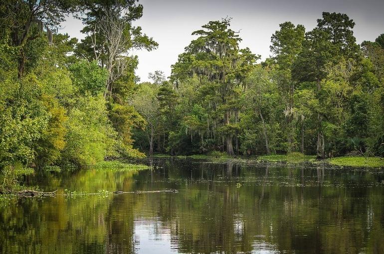 Добычу полезных ископаемых на болотах хотят упростить