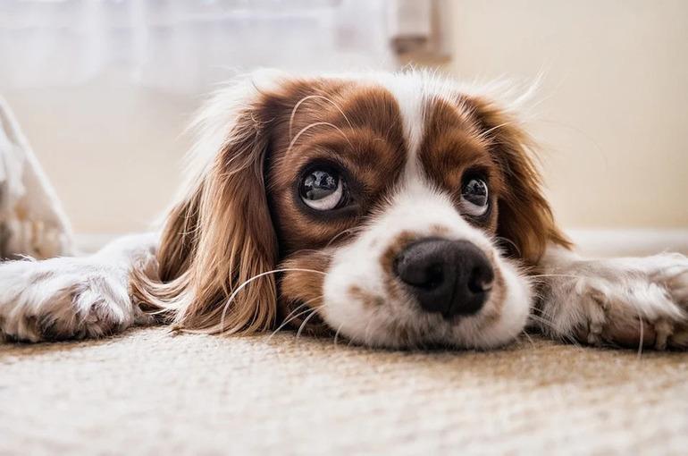 Регионам предложили дать право устанавливать требования к содержанию домашних животных