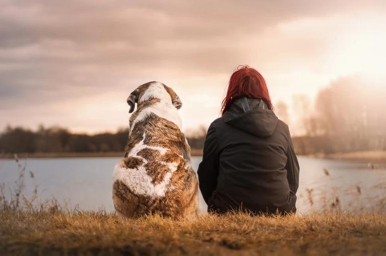 Майоров: требования к выгулу собак в регионах будут учитывать местную специфику