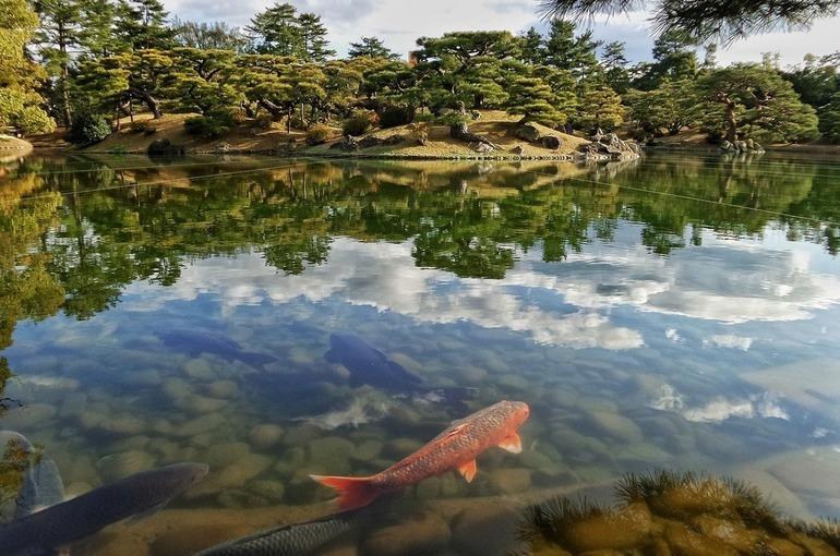 Разведение рыбы в крупных водоёмах упростят