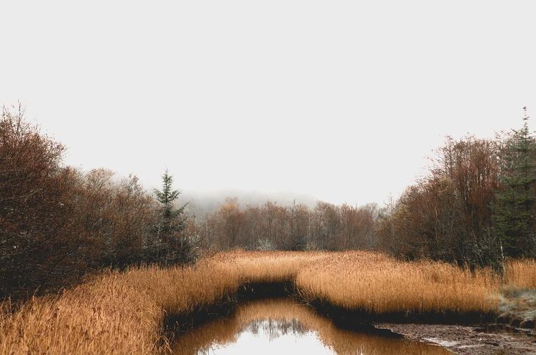 Добывать ископаемые на болотах станет проще