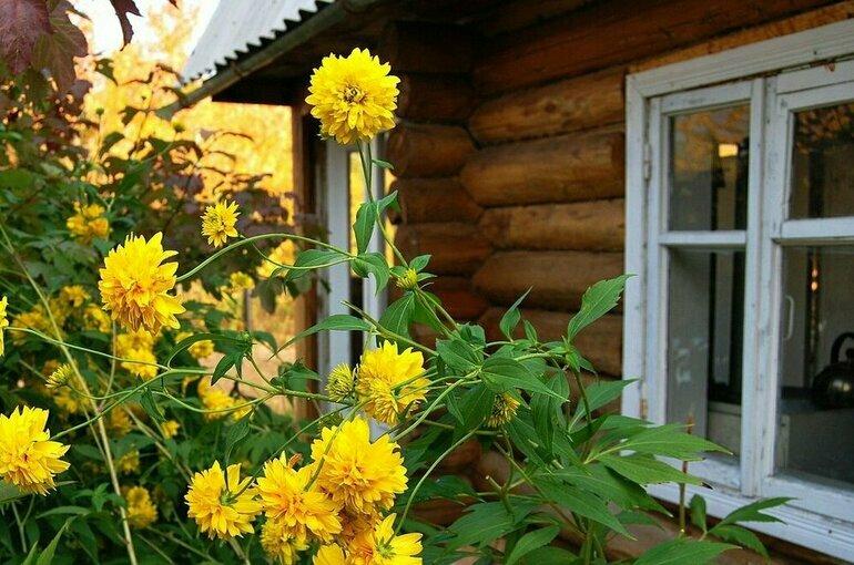 За пять лет в Подмосковье по «дачной амнистии» зарегистрировали более 650 тысяч домов