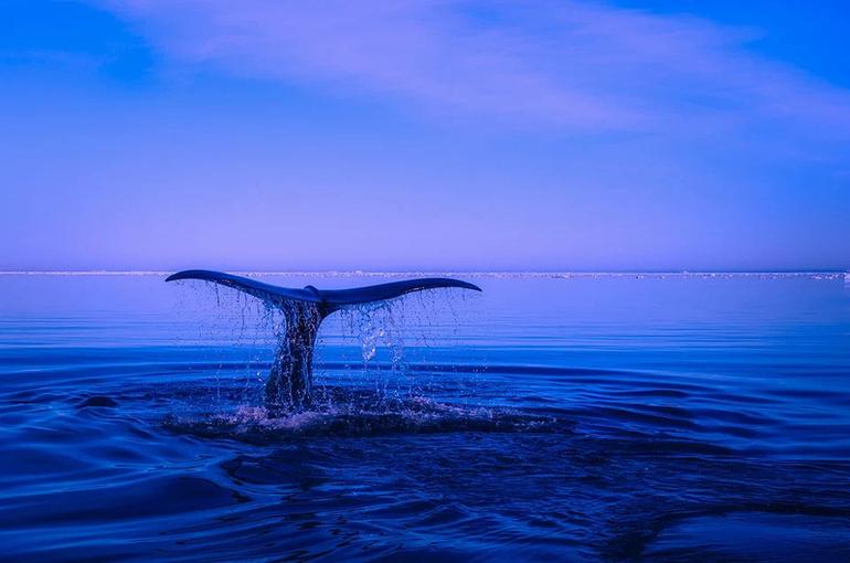 В России хотят с 2022 года запретить вывоз китов