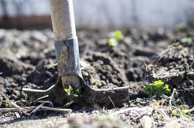 В России хотят создать комиссию по вопросам развития коллективного огородничества