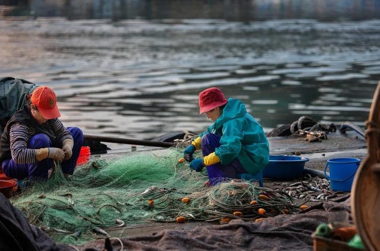 Гордеев: кабмин разработает проект о запрете на вывоз за рубеж прибрежного улова