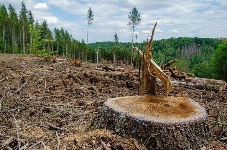 Бизнес должен будет восстановить лес за три года