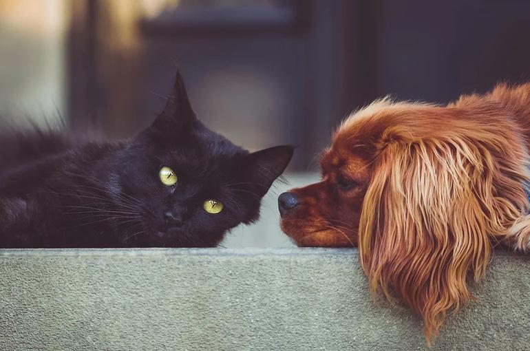 В Госдуму внесли проект о допустимом количестве домашних животных в квартире