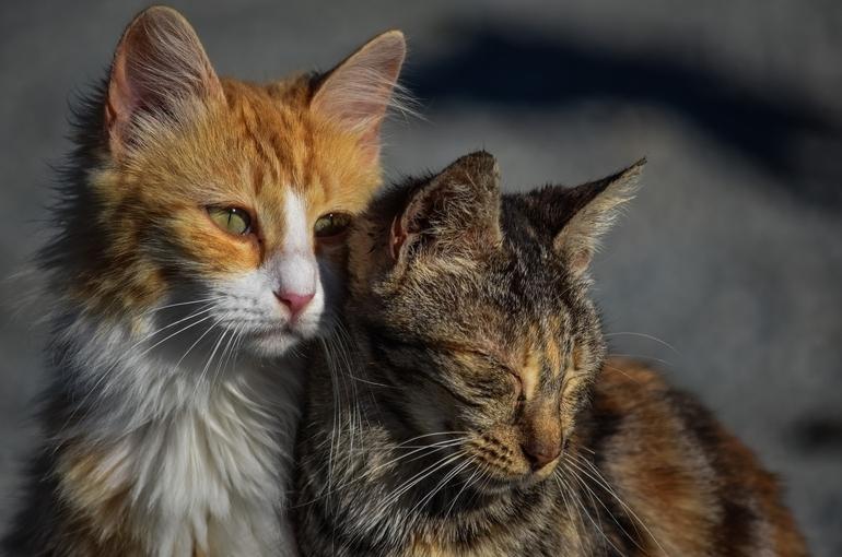 Дома перед сносом просят освобождать от бездомных животных