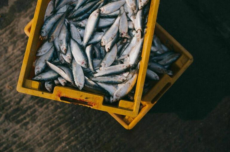 На Дальнем Востоке будут перерабатывать больше рыбы