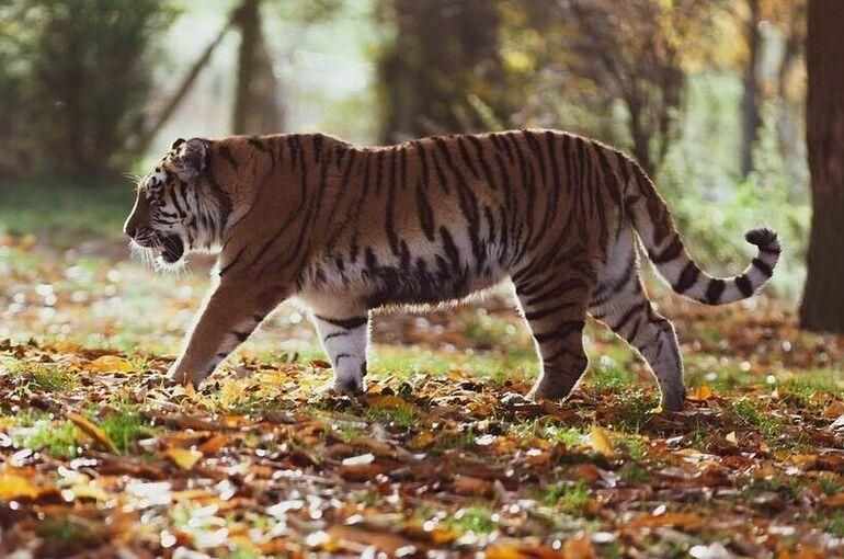 В Минприроды заявили о риске исчезновения 13 видов животных