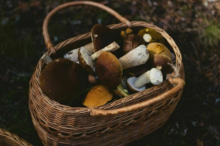 Миколог назвал полезные свойства лисичек и трутовиков