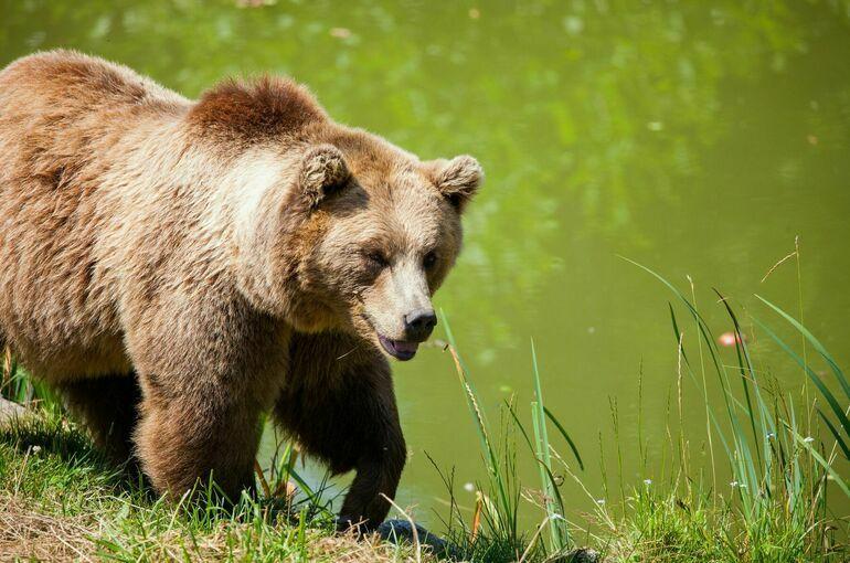 В Иркутске сообщили о появлении медведей рядом с населенными пунктами