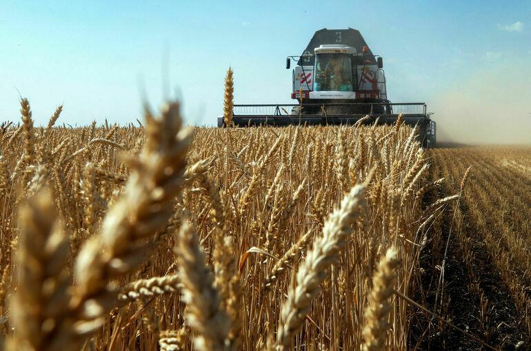 Почему российское зерно оказалось лучше французского