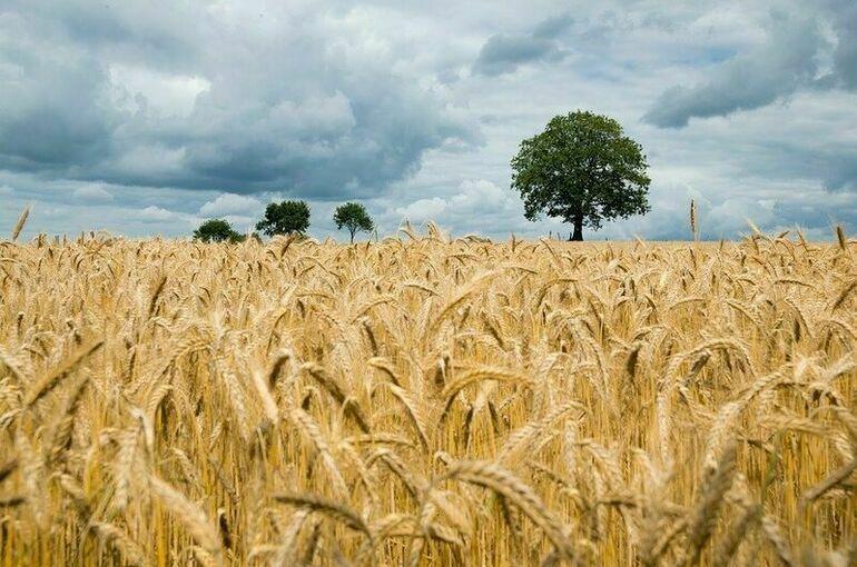 На поддержку аграриев в Чувашии дополнительно направят почти 280 млн рублей
