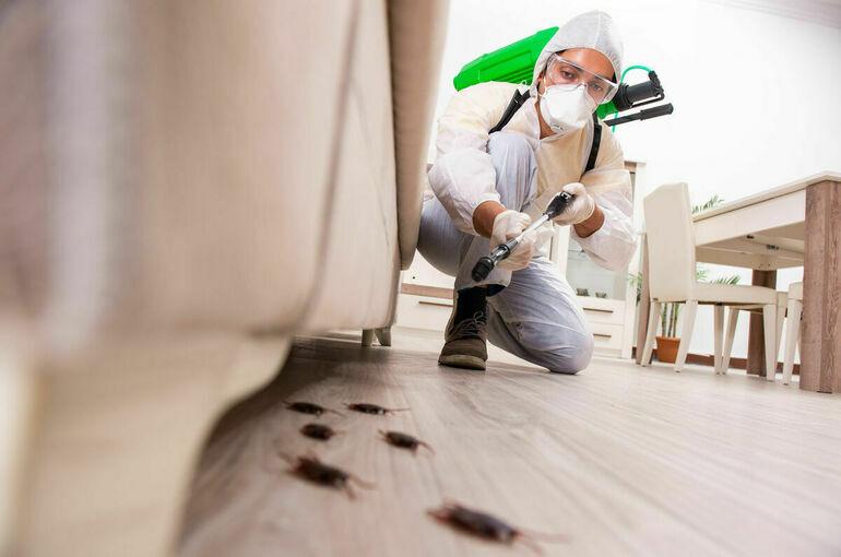 Вытравить тараканов и остаться в живых