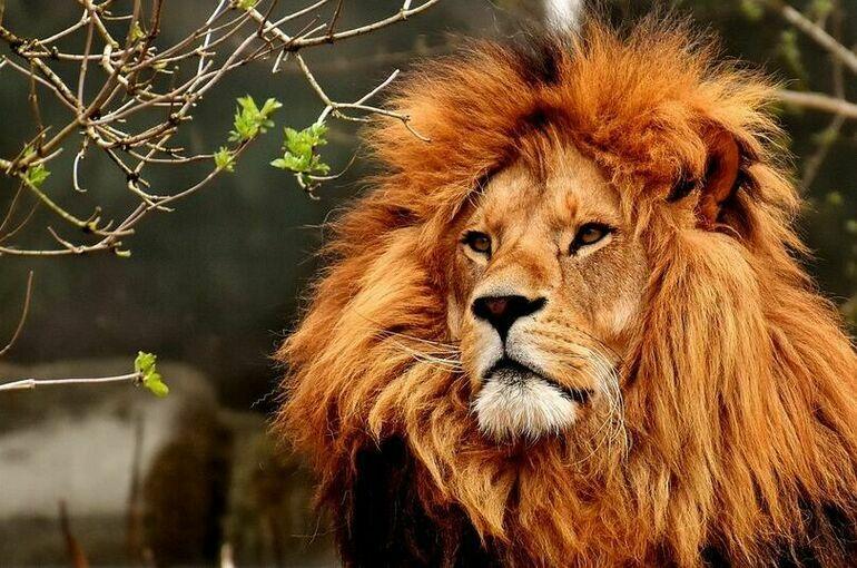 Госнадзору за содержанием животных в цирках и зоопарках поставят целевые показатели