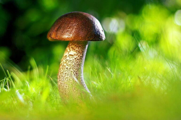 В Роспотребнадзоре рассказали о правилах сбора грибов