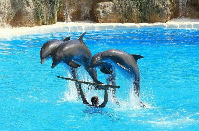 Цирки и дельфинарии хотят проверять с особым пристрастием