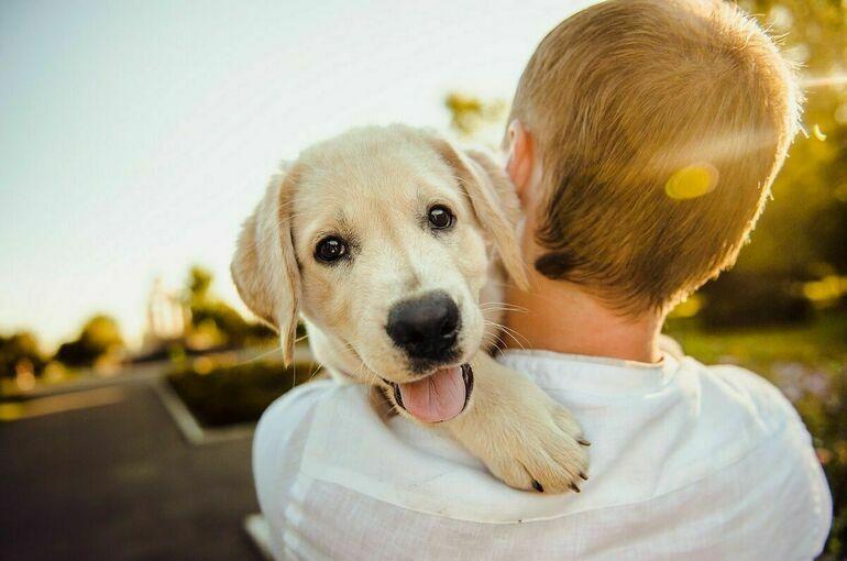 Сумма выписанных в Подмосковье штрафов за выгул собак выросла более чем в 10 раз