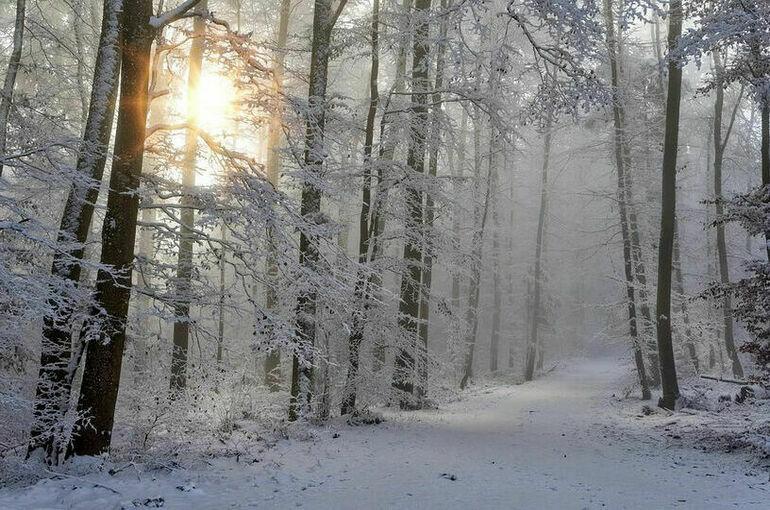 В Росгидромете спрогнозировали тёплую зиму в ряде регионов страны