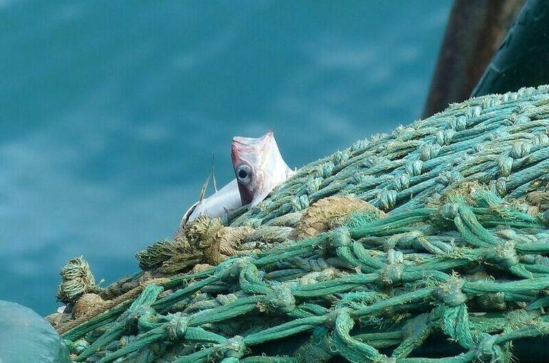 Кабмин хочет повысить ставки сборов за вылов отдельных видов рыбы