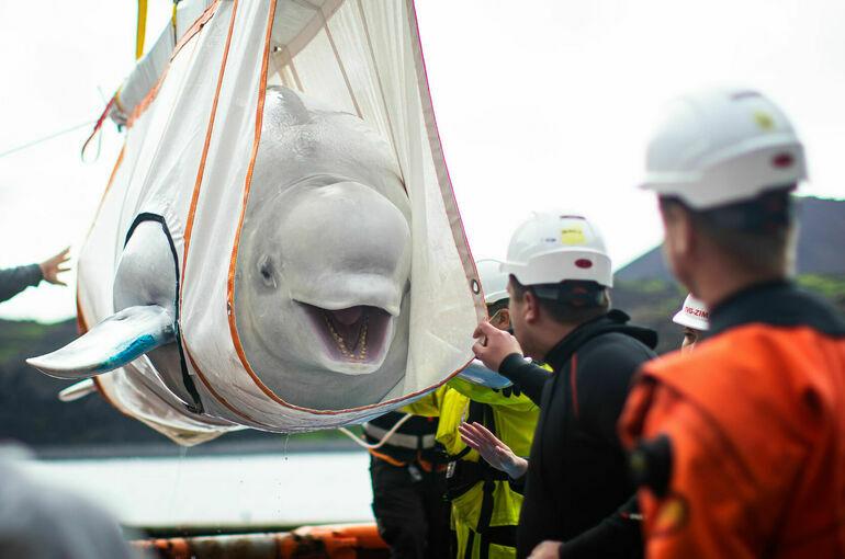 Китам и дельфинам закроют «выезд» за границу