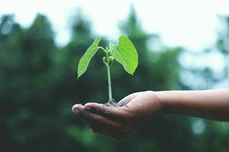 Правительство «окрасит» экологические платежи
