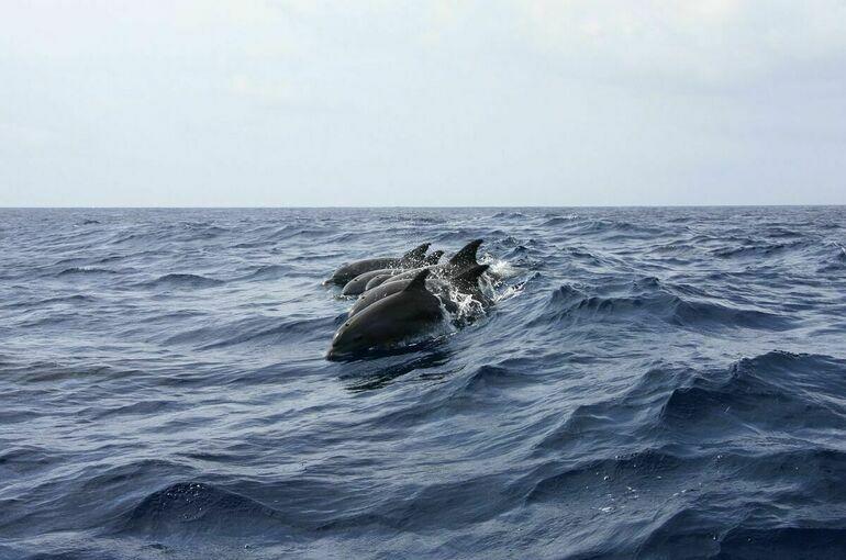 Правительство одобрило запрет на вылов китов и дельфинов