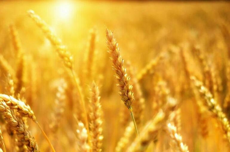 Минсельхоз намерен ввести отдельную квоту на экспорт пшеницы