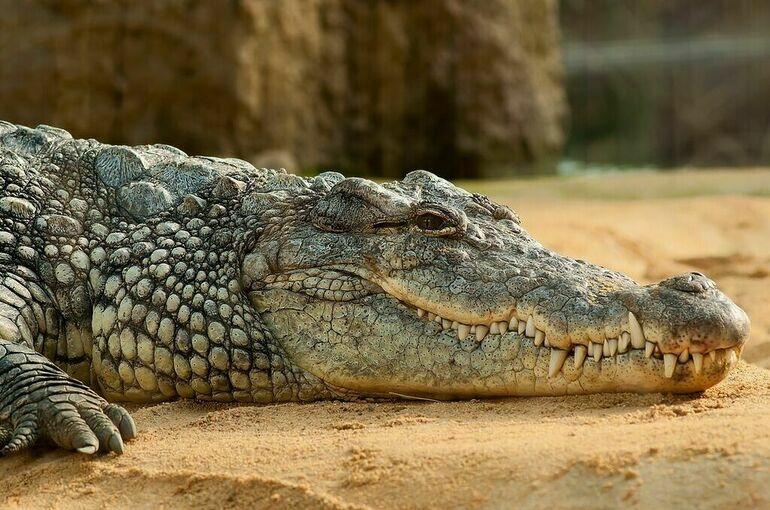 Новый вид древних крокодилов обнаружили в Китае