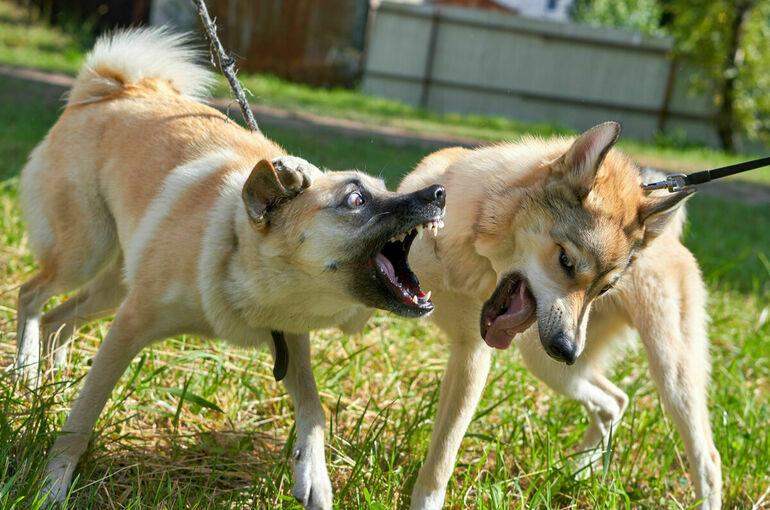Собачьи бои могут обернуться для их организаторов крупными штрафами