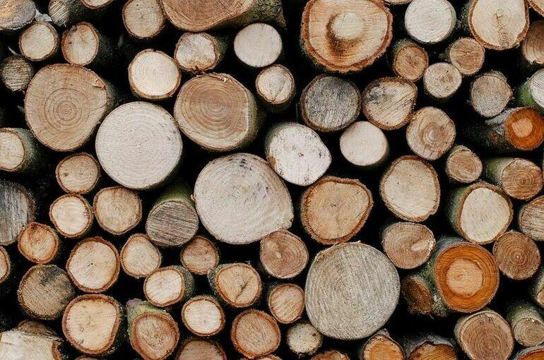 Минприроды предлагает новые штрафы за нарушения при учете древесины