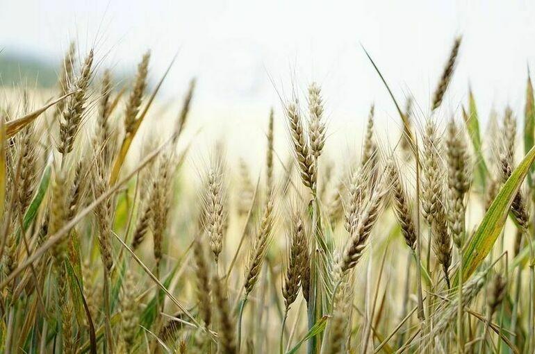 Россия может вдвое увеличить экспорт зерна, заявил эксперт