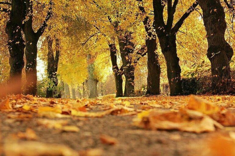 Синоптик рассказал, когда в Москве закончится золотая осень