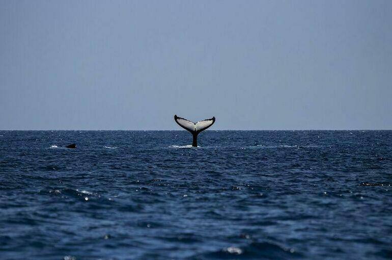 Госдума приняла в первом чтении проект о запрете вылова китов и дельфинов